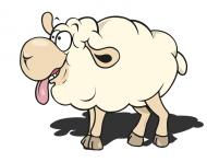 owca / owieczka