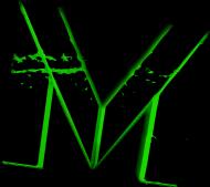Kubek Krwawicowo-Menfisowy