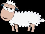 Owca - koszulka zwykła