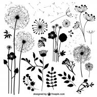 dzikie kwiaty - czarna