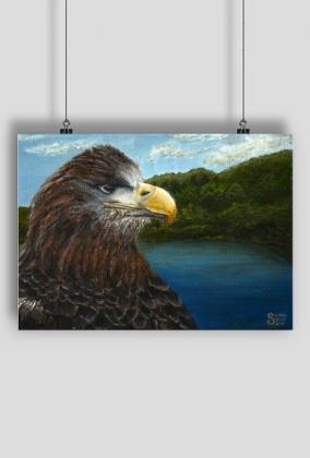 Plakat Orzeł/Poster Eagle
