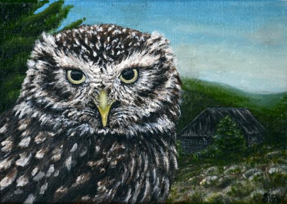 Plakat Pójdźka/Poster Little Owl
