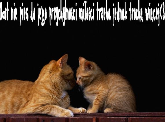 kot nie pies-czarna bluza
