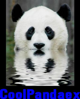 Panda- Koszulka
