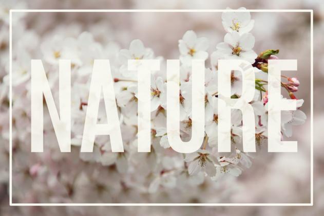 Ekotorba NATURE